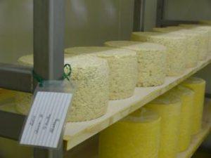 Cheese Aging at P.A. Bowen Farmstead
