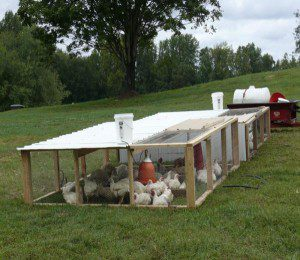 Chicken tractors at P.A.Bowen Farmstead