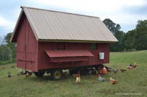 Mobile Laying Hen Coop