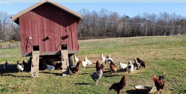 Eggmobile at P.A. Bowen Farmstead